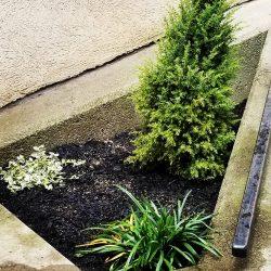 Job 24_After Plants